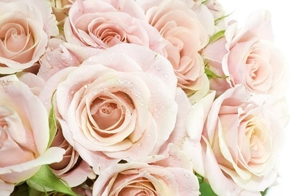 a_bouquet_of_pink_roses_picture_166777.jpg