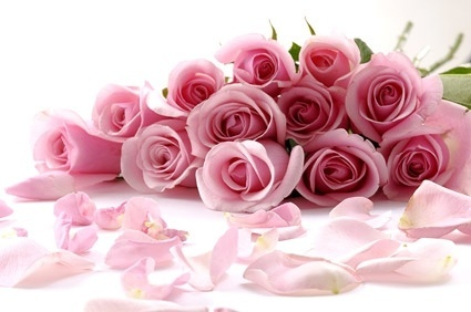 a bouquet of pink roses picture 166778
