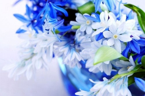 beautiful_blue_flowers_01_hd_picture_166920.jpg