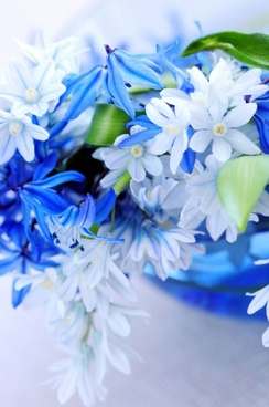 beautiful_blue_flowers_02_hd_pictures_166919.jpg