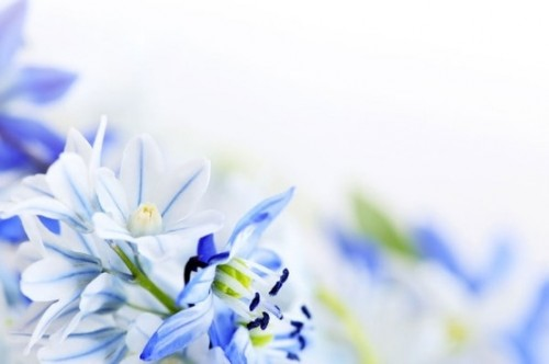 beautiful_blue_flowers_03_hd_picture_166918.jpg