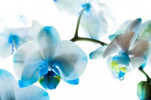 beautiful flowers 01 hd pictures 166957