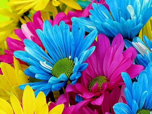 daisys_flowers_bloom_215387.jpg