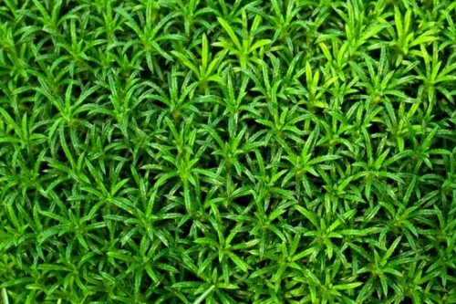 green_plant_wallpaper_202963.jpg