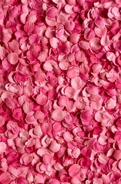 pink_rose_petals_background_picture_166706.jpg