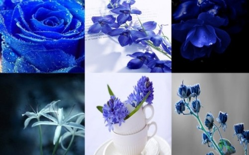 plant flowers hd picture the quiet elegance of the blue 166856