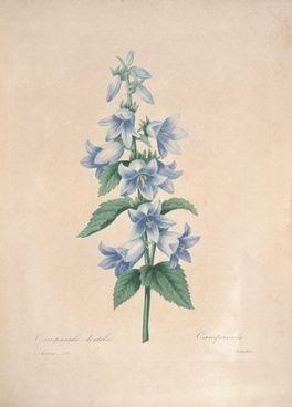sen_department_elegant_plant_bookmark_166985.jpg