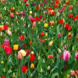 vivid_colorful_flowers_199024