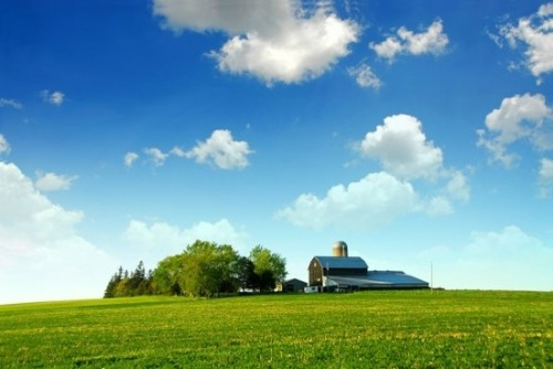 highquality_pictures_of_grass_and_a_tree_house_blue_sky_and_white_clouds_165974_1.jpg