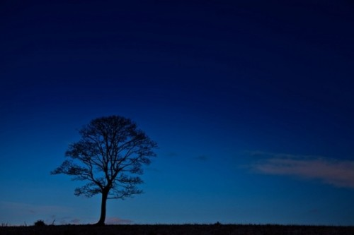 tree silhouette at night 194214