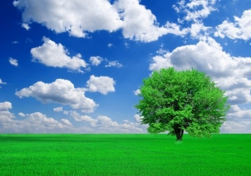trees_grass_blue_sky_and_highdefinition_picture_165990_1.jpg