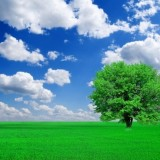 trees_grass_blue_sky_and_highdefinition_picture_165990_1