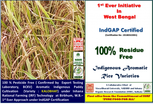 IndGAP-certified-Paddy-variety---Kalobhat.png