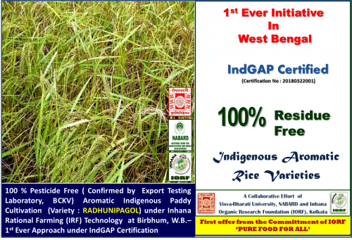 IndGAP-certified-Paddy-variety--Radhunipagol.png